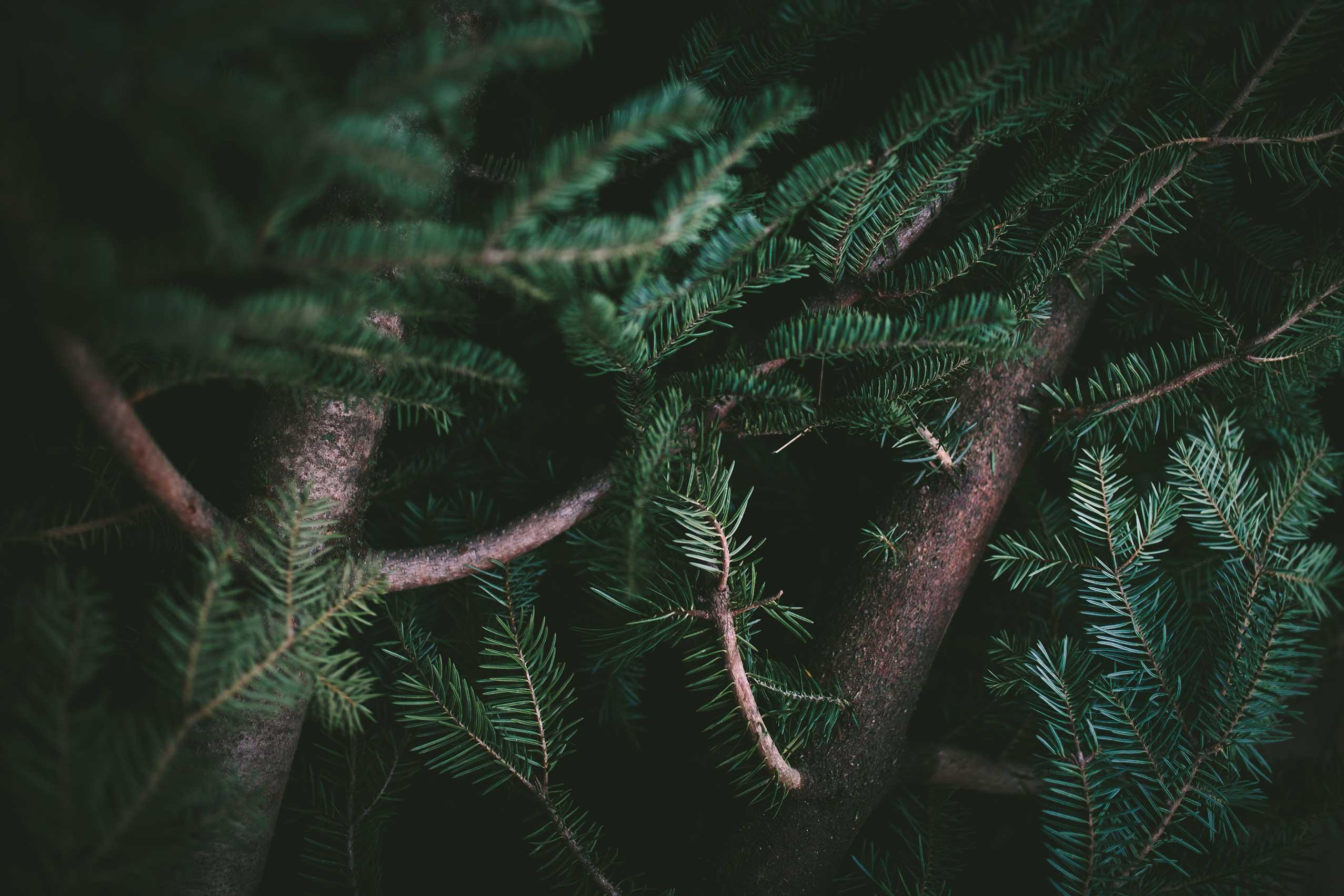 The Golden Christmas Reveillon
